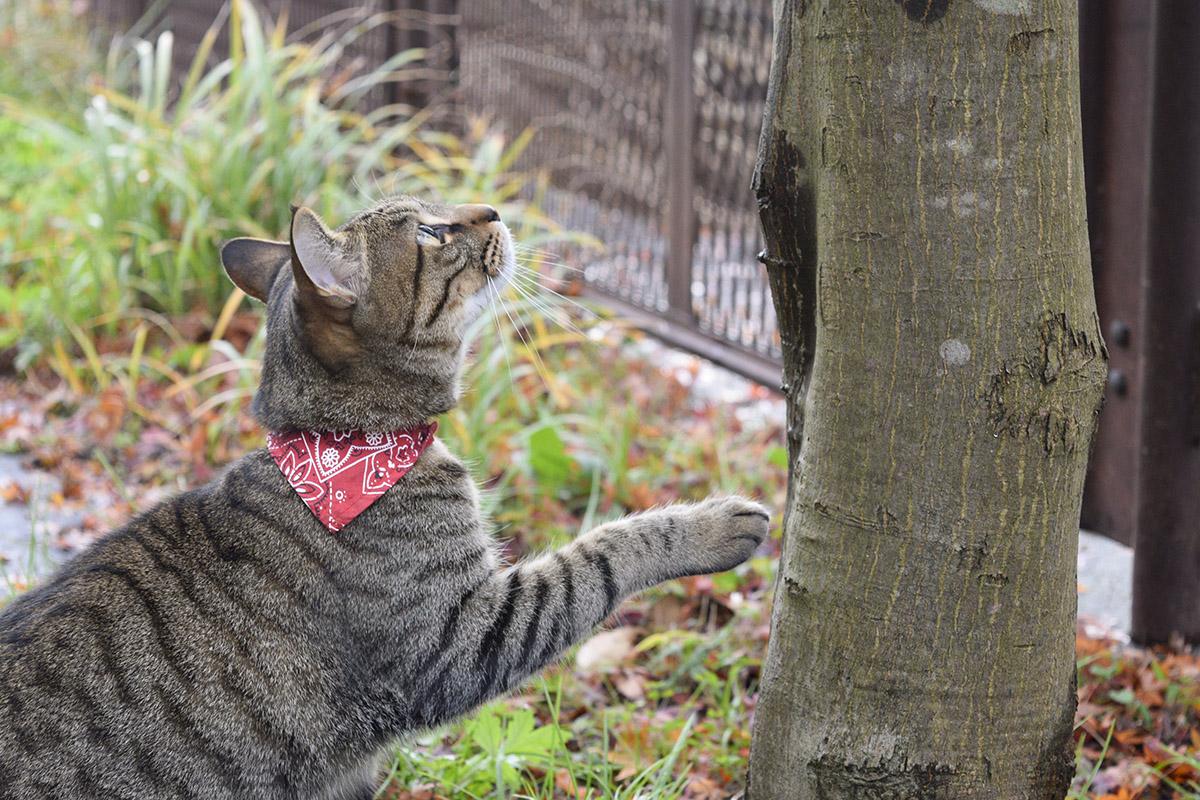雨上がりに鳥を狙うキジトラ猫の虎ノ介
