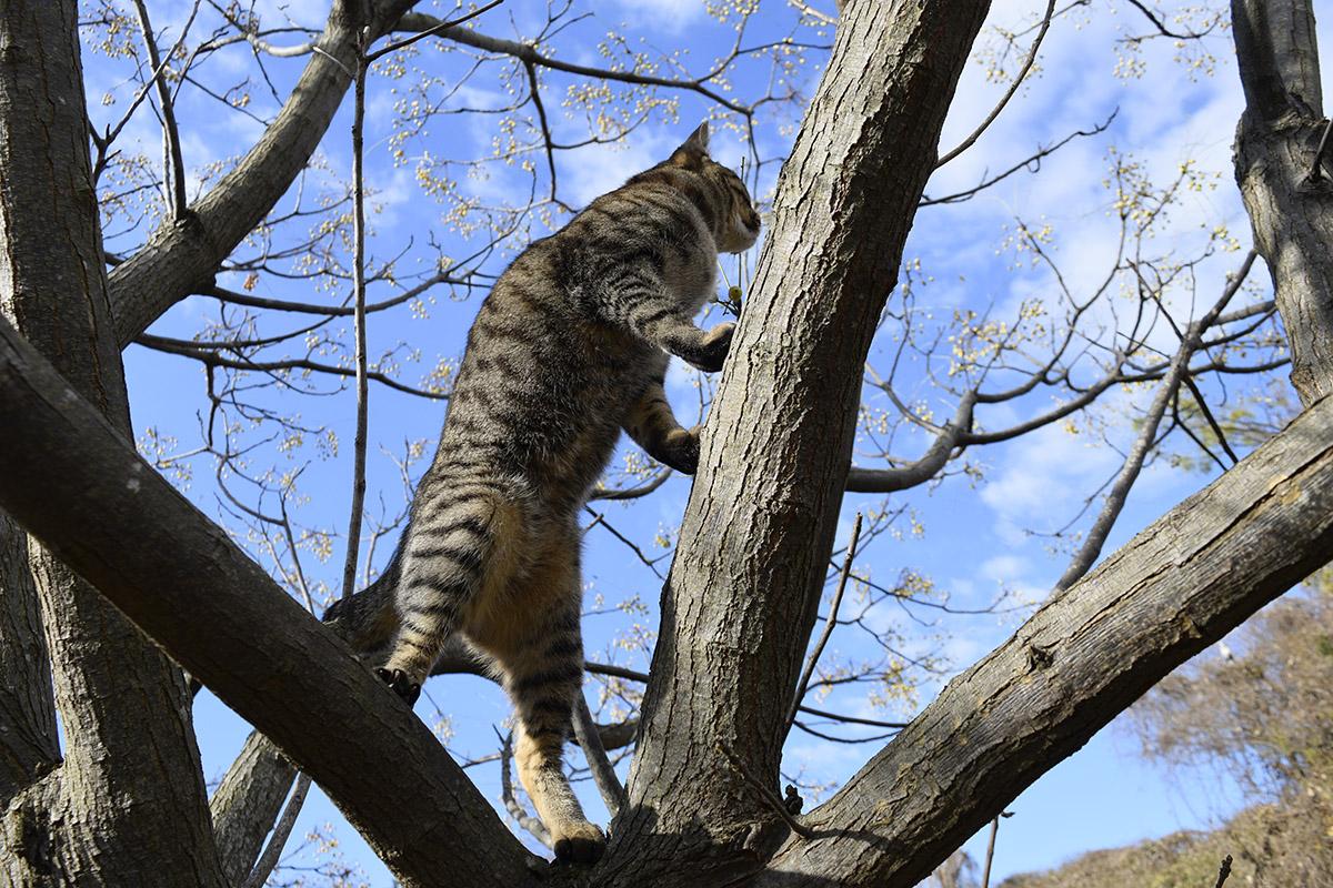 鳥を必死でおいかけるキジトラ猫の虎ノ介