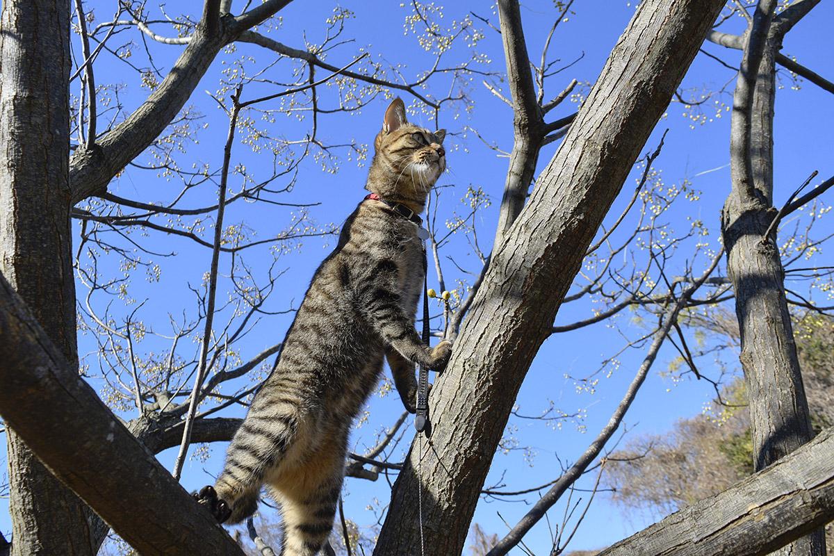 鳥を狙って立ち上がるキジトラ猫の虎ノ介