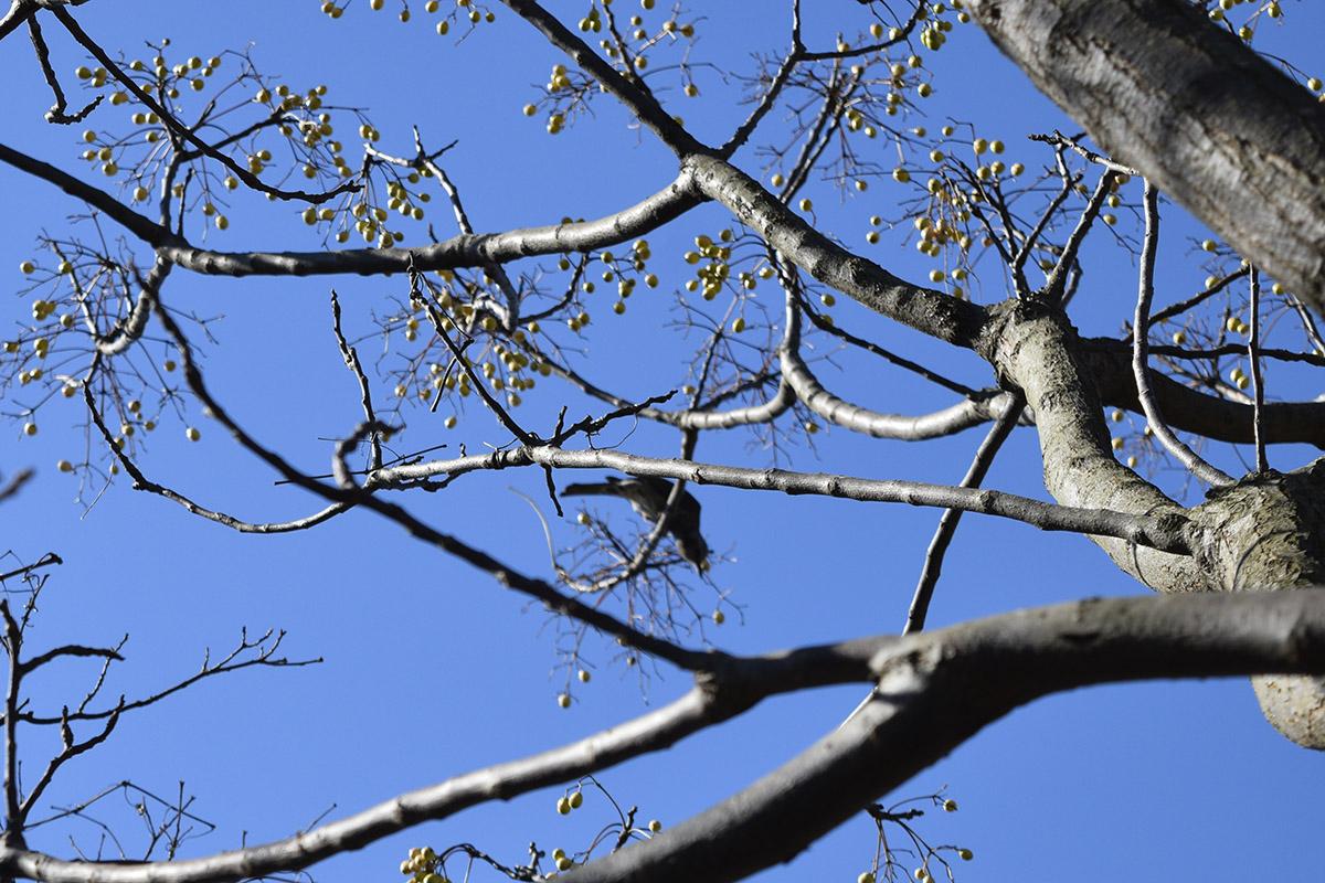 木の実をついばむ鳥