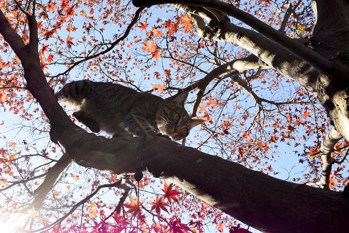 木から降りようとする虎ノ介