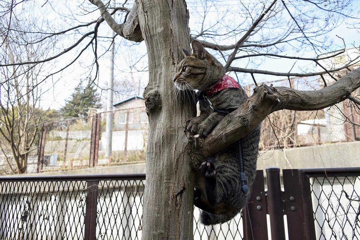 木の枝にぶら下がる虎ノ介