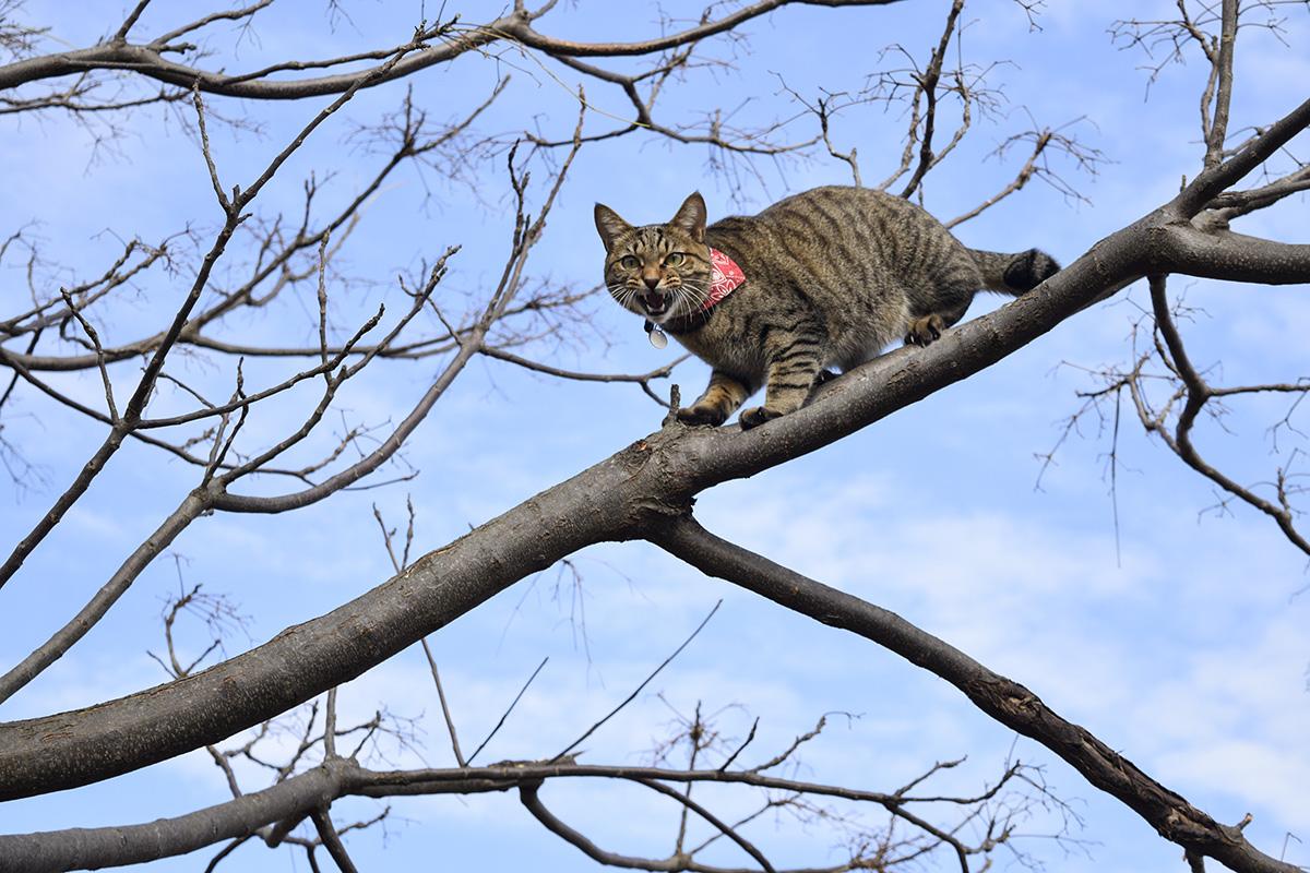 木の上から降りられなくなって人間に助けを求める虎ノ介