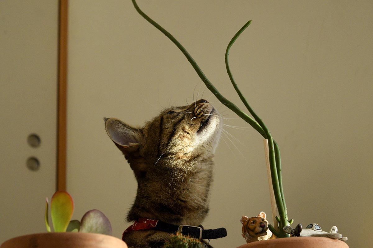 不思議な植物を見上げる虎ノ介