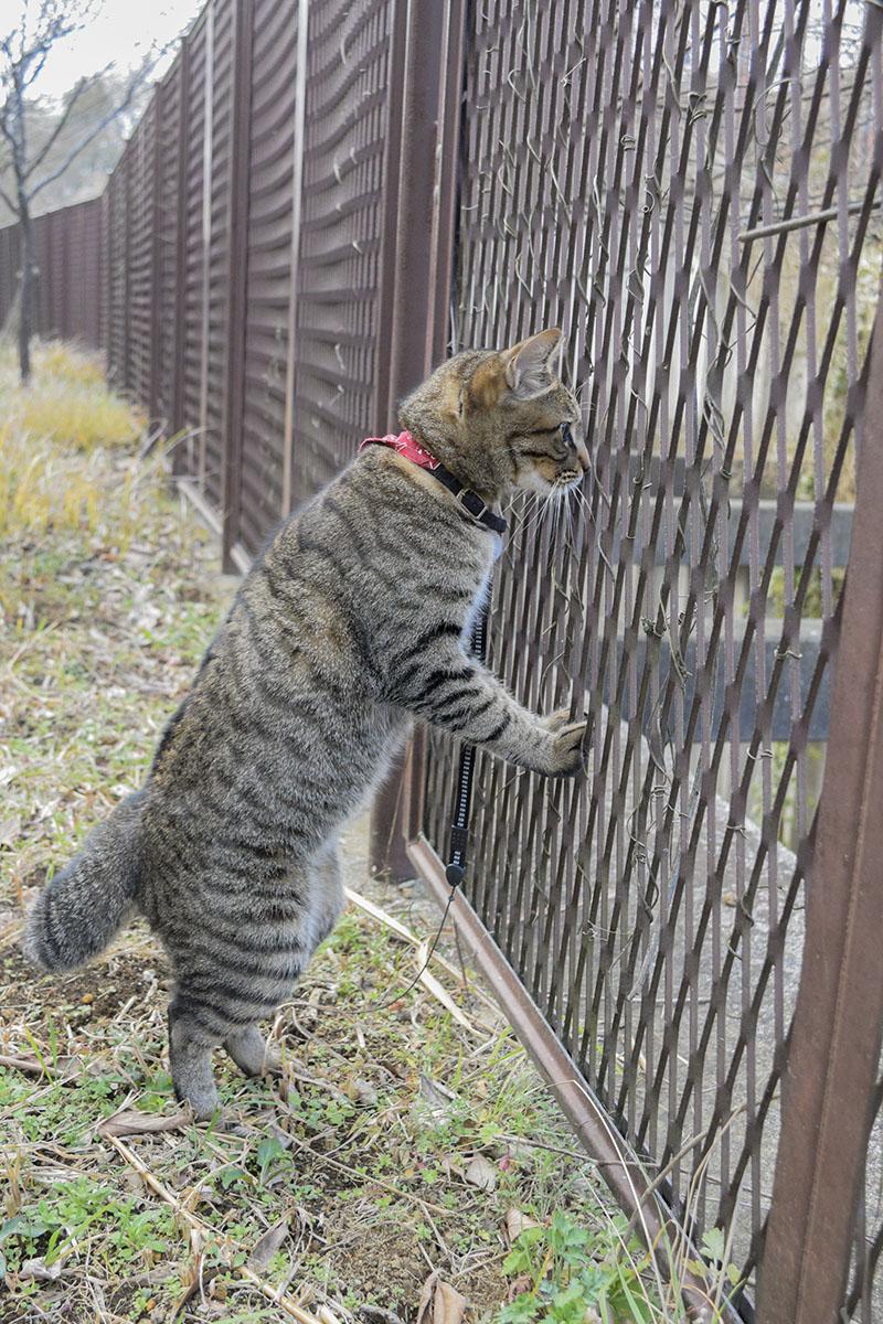 フェンスの向こうの鳥を見つめる虎ノ介