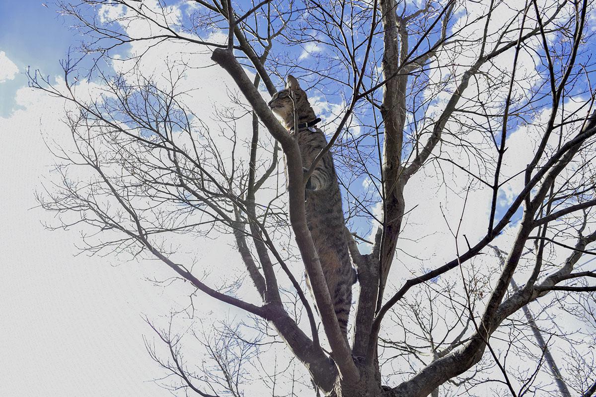 木に登って2本足で立ち周囲をみる虎ノ介