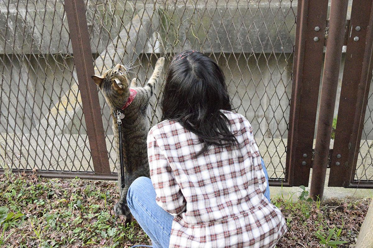 隣の子と遊ぶキジトラ猫の虎ノ介