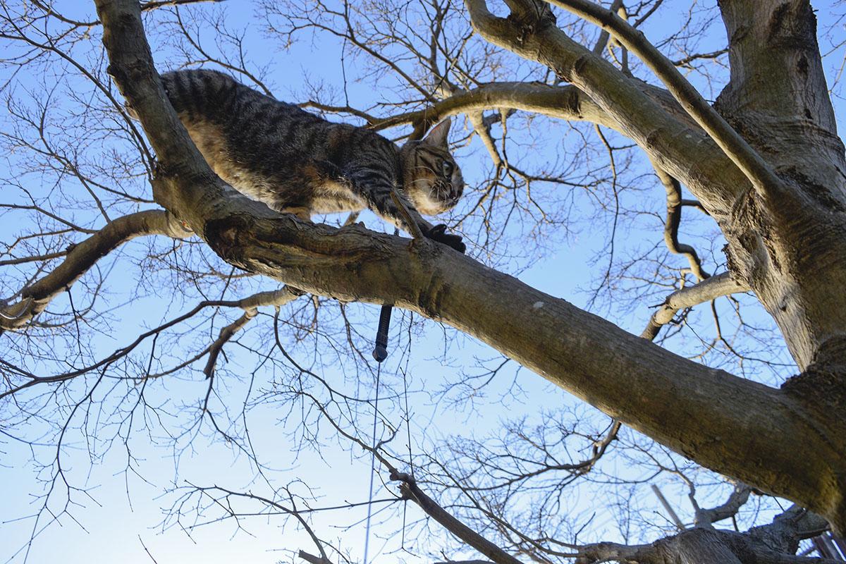 自力で木から降りようと頑張る虎ノ介