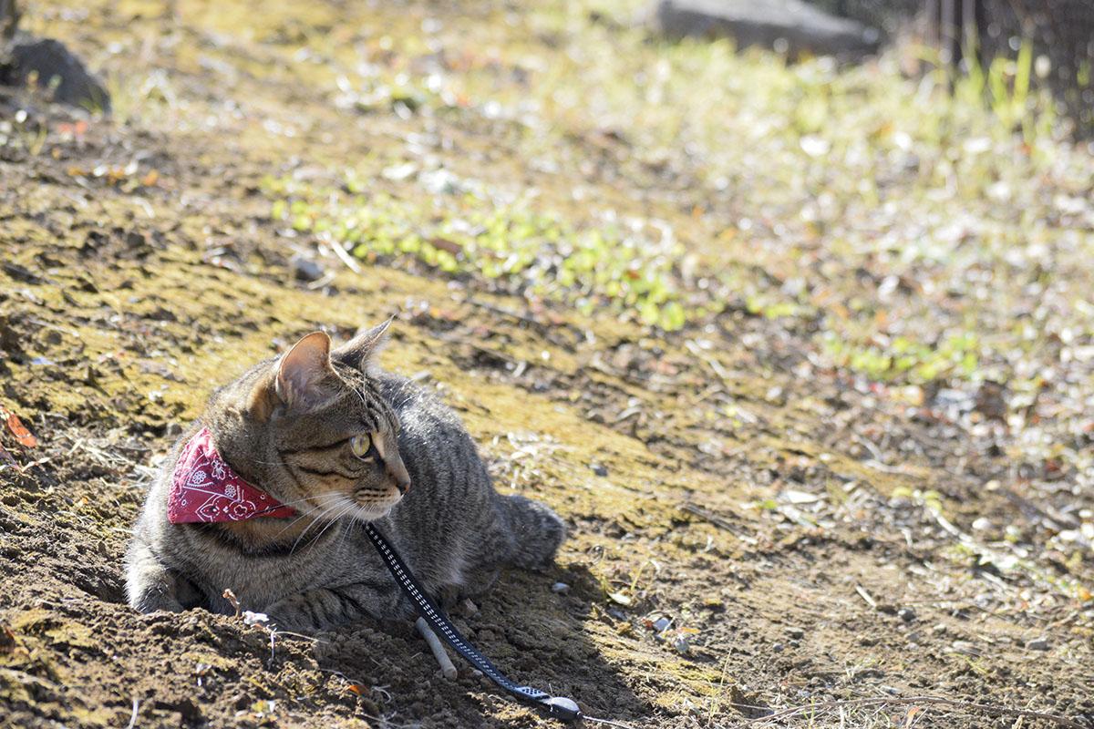 穴に腕をいれて座るキジトラ猫の虎ノ介