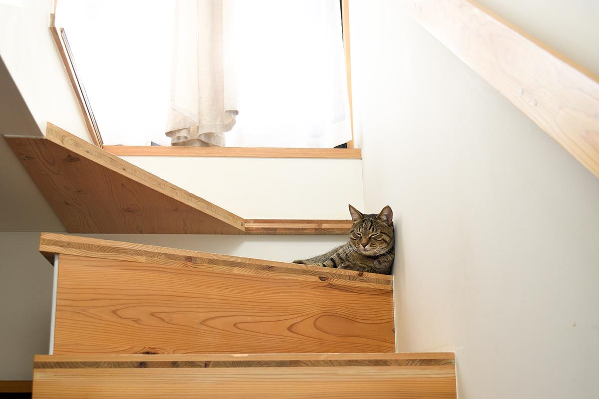 散歩から帰ってきて階段でうたた寝するキジトラ猫の虎ノ介