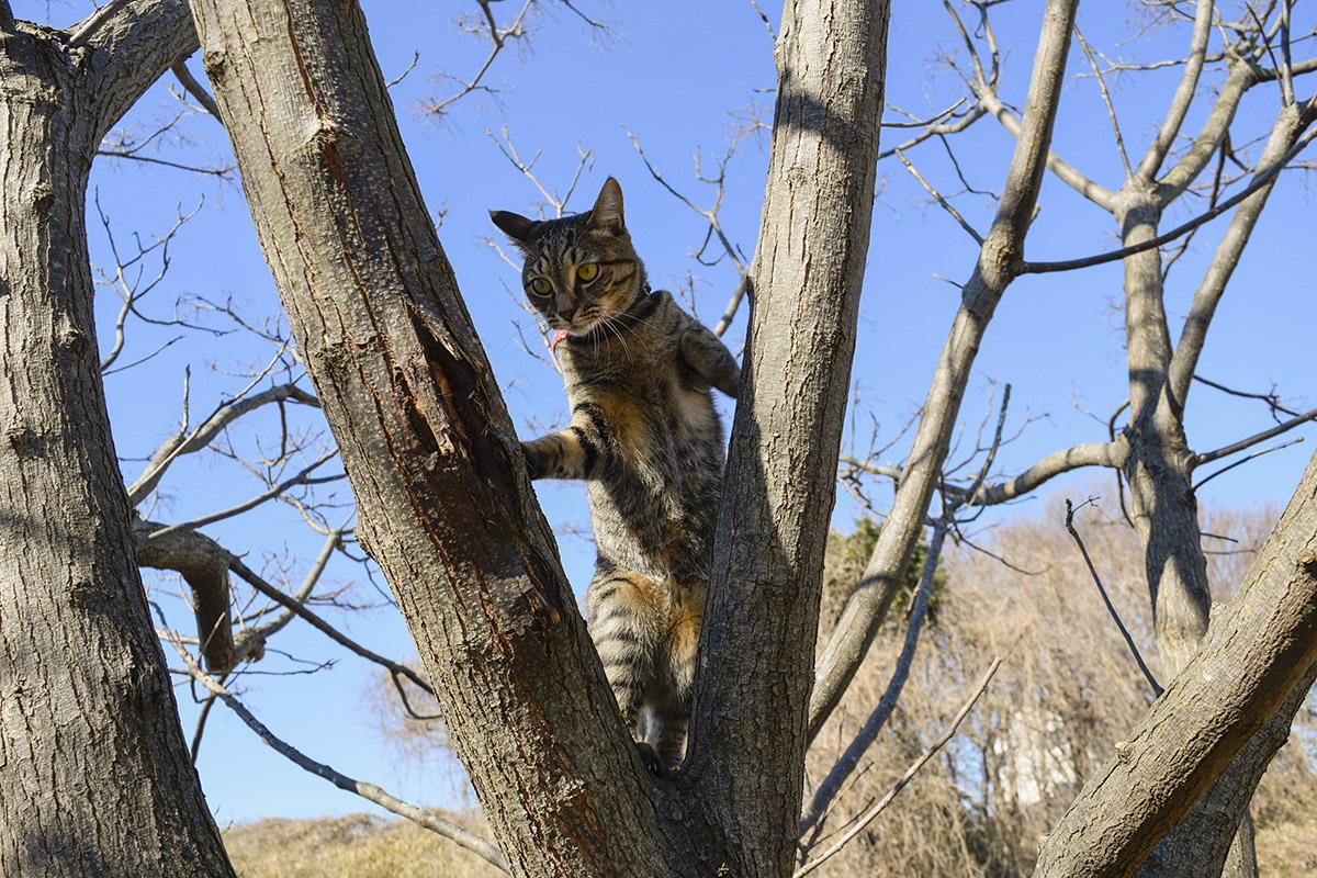 高いところから見下ろすキジトラ猫の虎ノ介