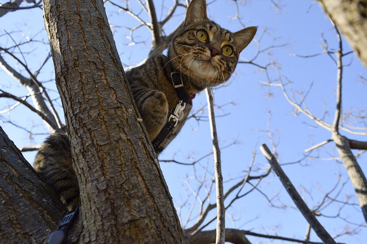 そーっと手を伸ばすキジトラ猫の虎ノ介