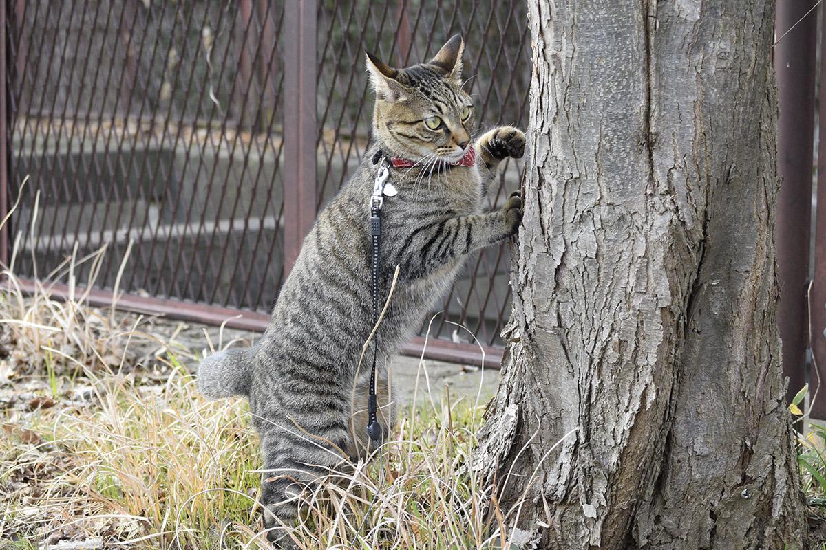 木の陰から鳥をみる虎ノ介