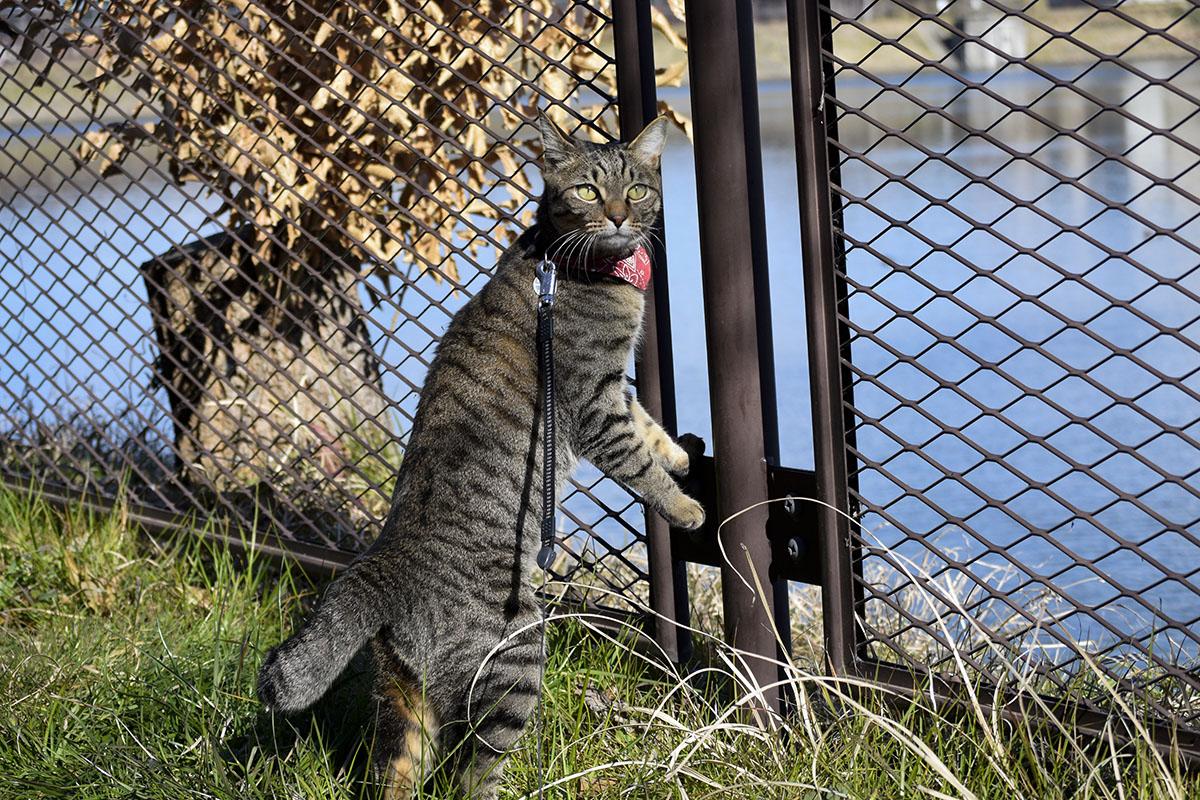 雑木林がきになるキジトラ猫の虎ノ介