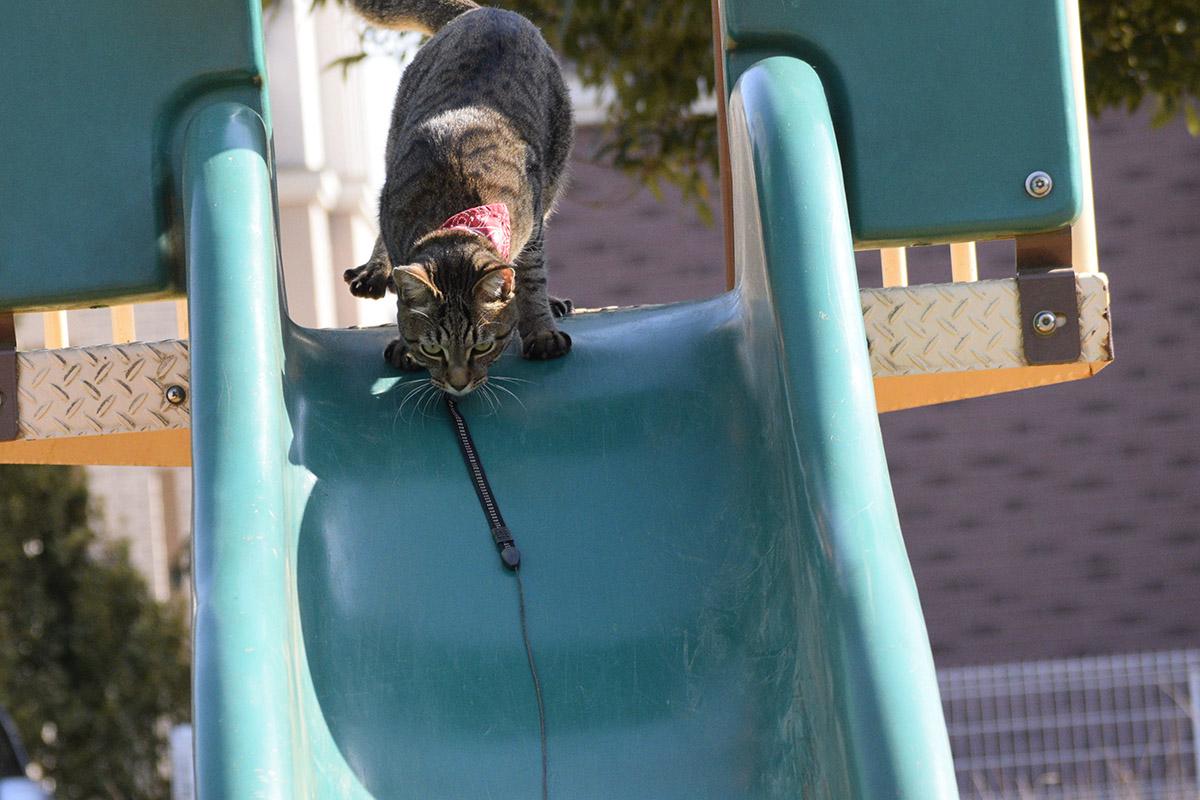 滑り台から降りようとするキジトラ猫の虎ノ介