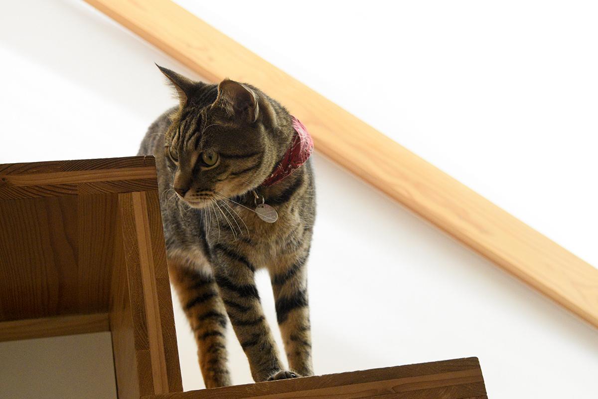 階段で遊ぶキジトラ猫の虎ノ介