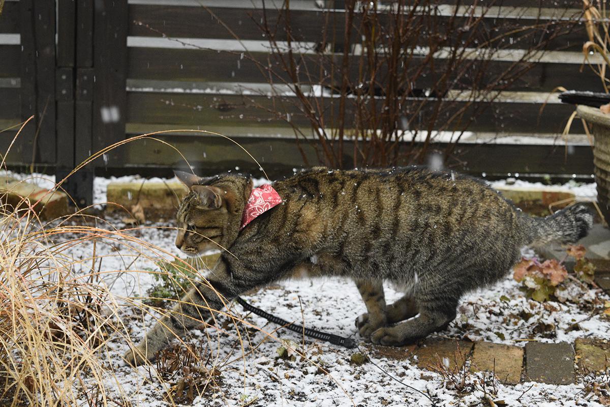 雪の中パトロールする虎ノ介