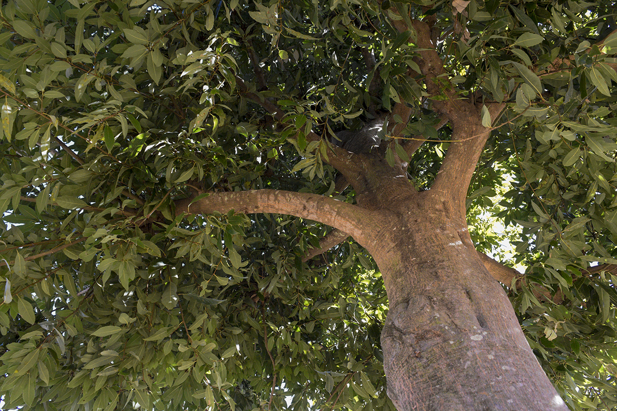 下からみた木