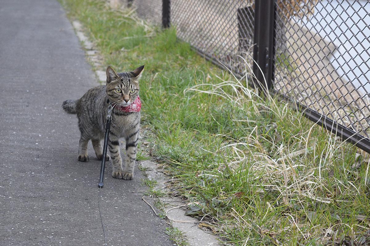 唖然とするキジトラ猫の虎ノ介