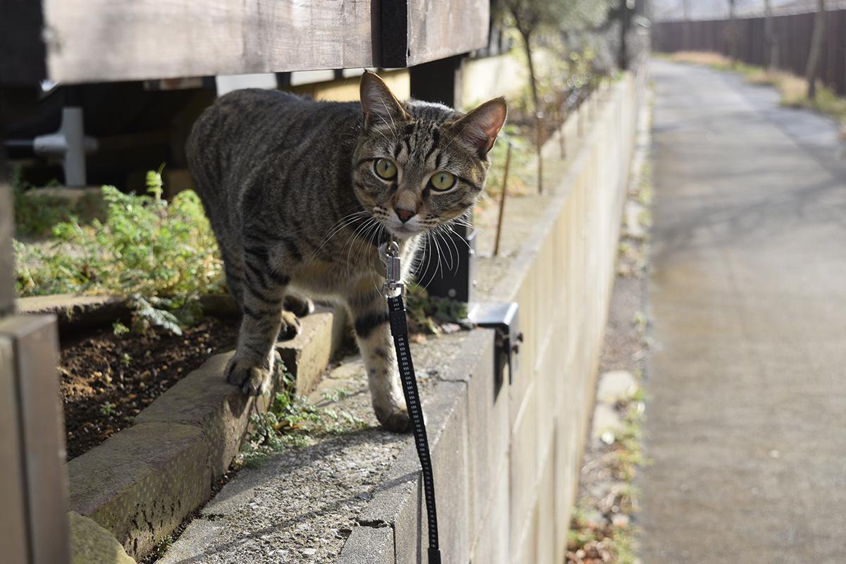 犬を警戒するキジトラ猫の虎ノ介