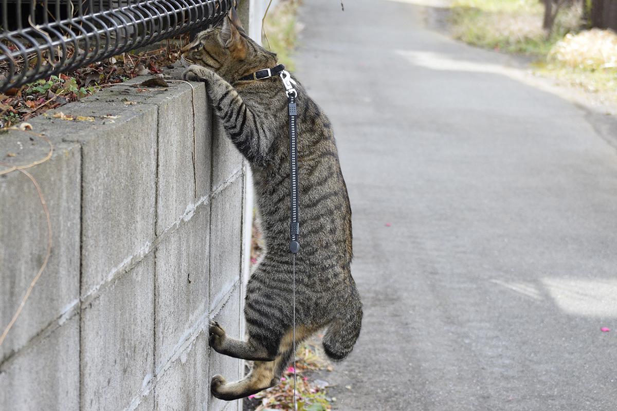 フェンスにぶら下がる虎ノ介