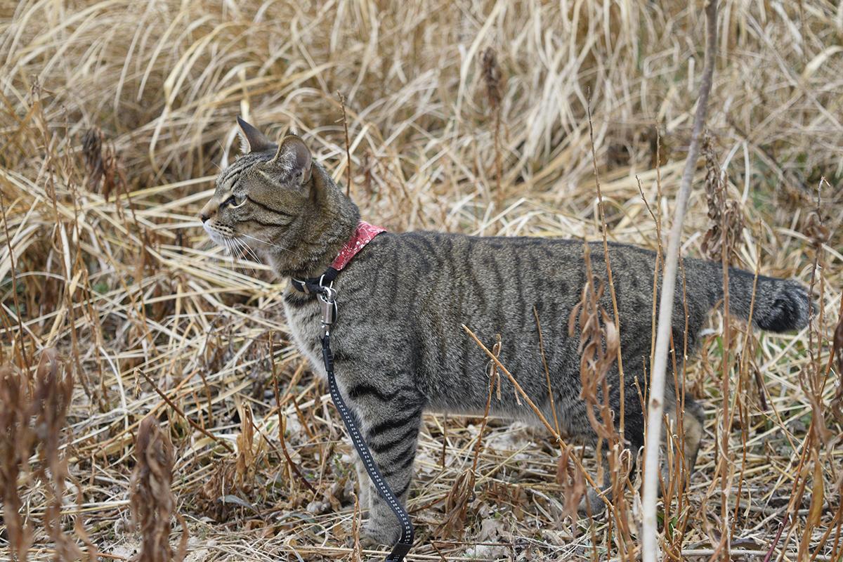 雨がふってきてしょんぼりなキジトラ猫の虎ノ介