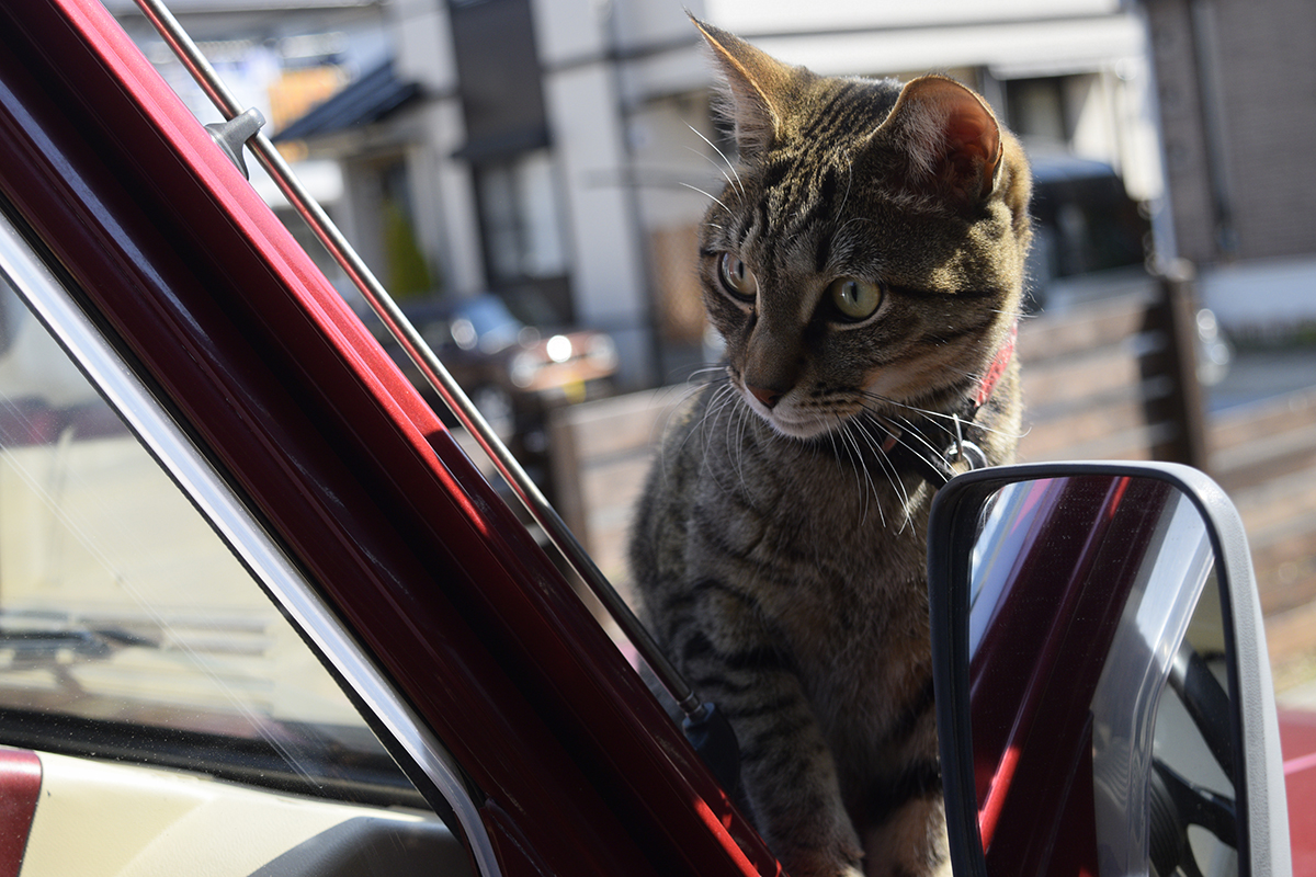 車の匂いをチェックする虎ノ介