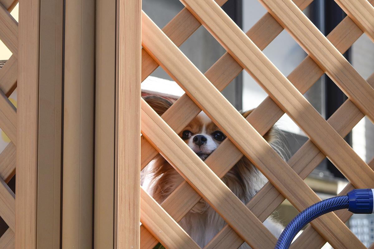 ご近所さんちの犬のクレアちゃん