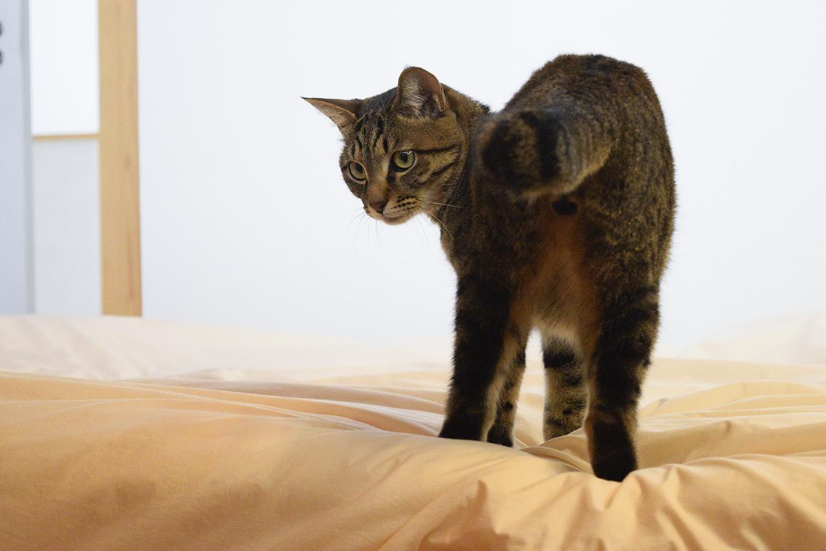 追いかけっこをするキジトラ猫の虎ノ介