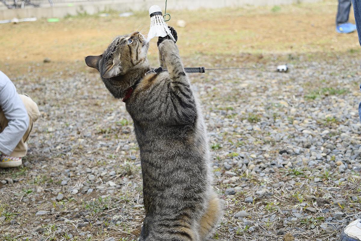 空き地で子供たちと遊ぶキジトラ猫の虎ノ介