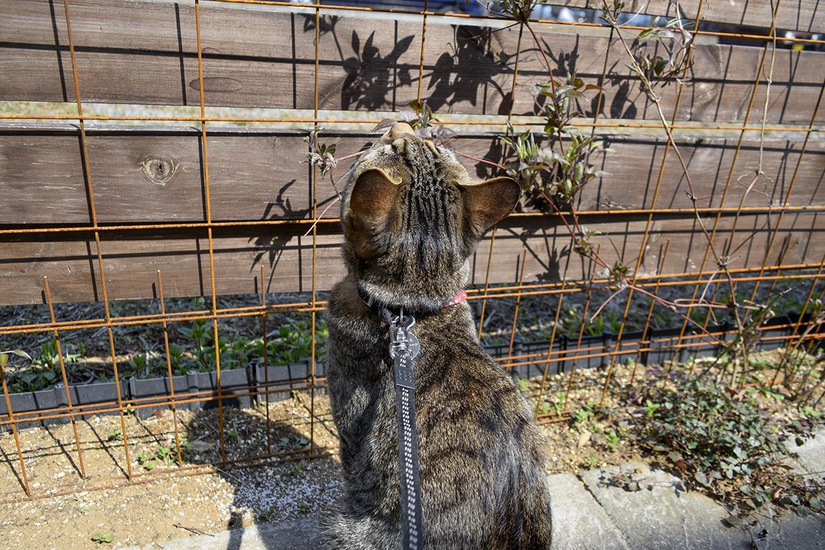 テントウムシをみつけたキジトラ猫の虎ノ介