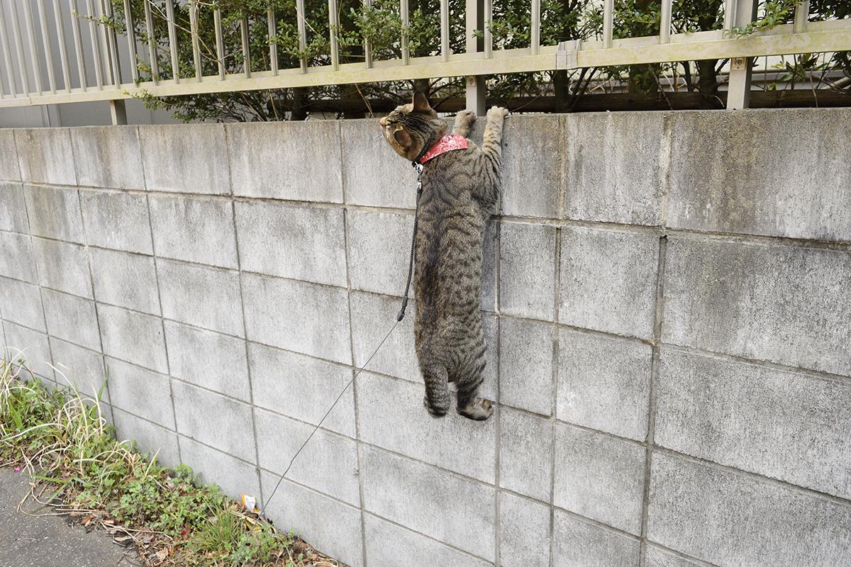 鳥に発見されて逃げられるキジトラ猫の虎ノ介