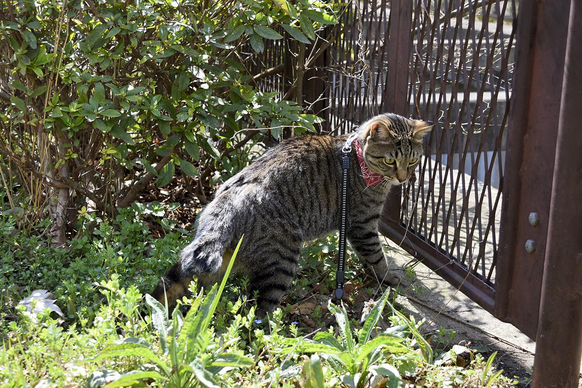 穴を発見したキジトラ猫の虎ノ介