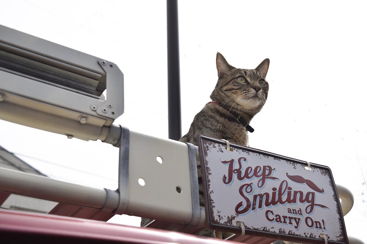 車の上で景色を眺めるキジトラ猫の虎ノ介