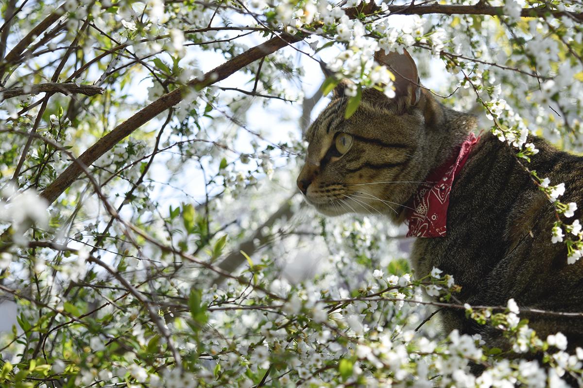 雪柳の中で虫を見つめる虎ノ介