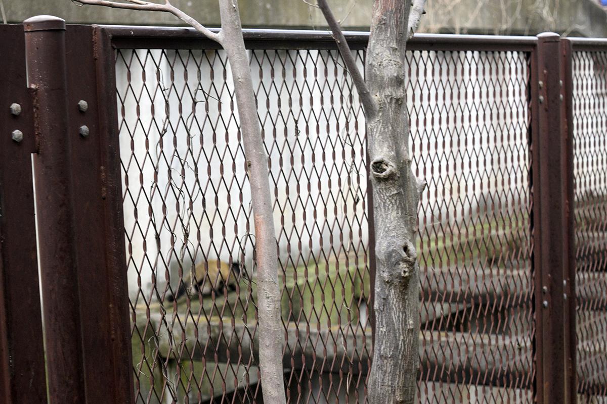 フェンスの向こうを通り過ぎる何か