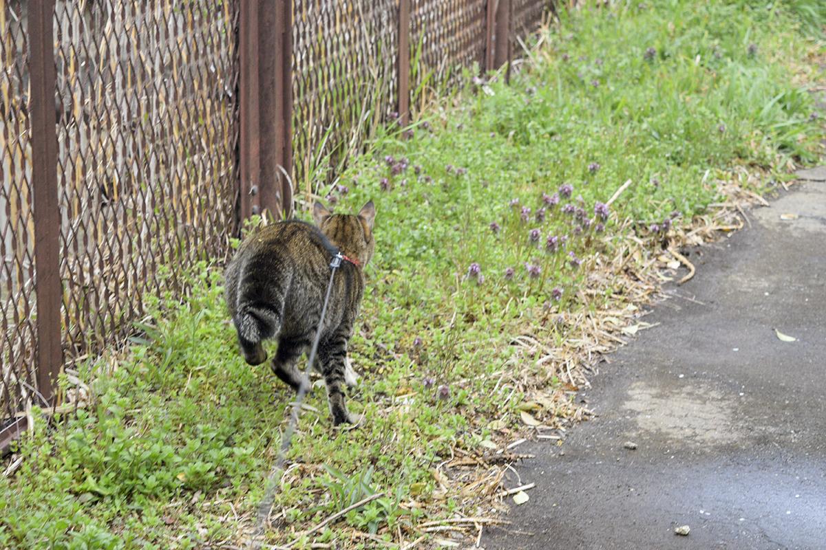 何かを追いかけるキジトラ猫の虎ノ介