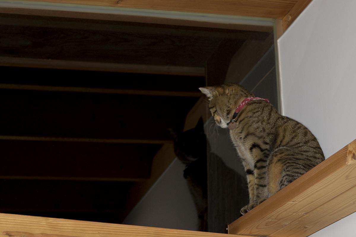 窓から外を見張るキジトラ猫の虎ノ介