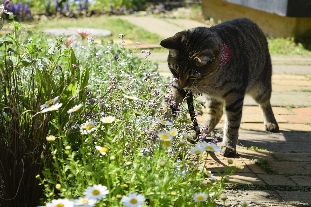 お花の中の虫をチェックする虎ノ介