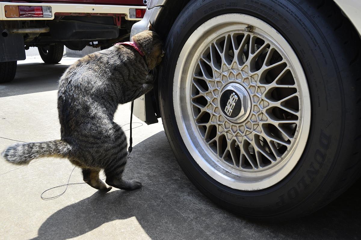 車の隙間をのぞくキジトラ猫の虎ノ介
