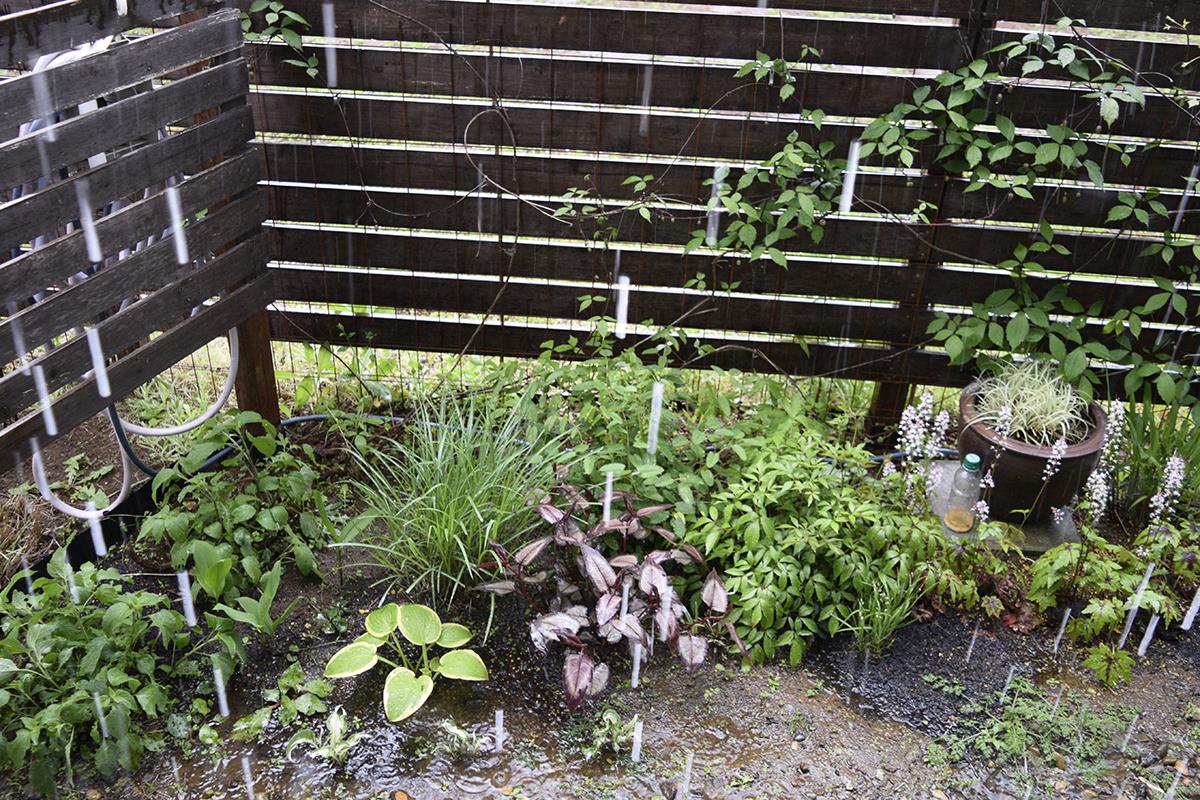庭への集中豪雨