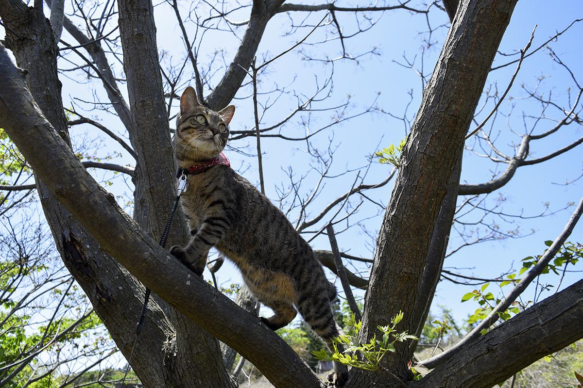 クマバチをみつけたキジトラ猫の虎ノ介