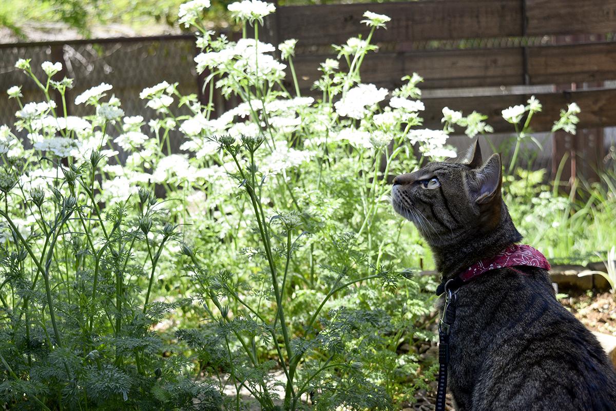 お庭でカサカサ音がする袋を見上げる虎ノ介
