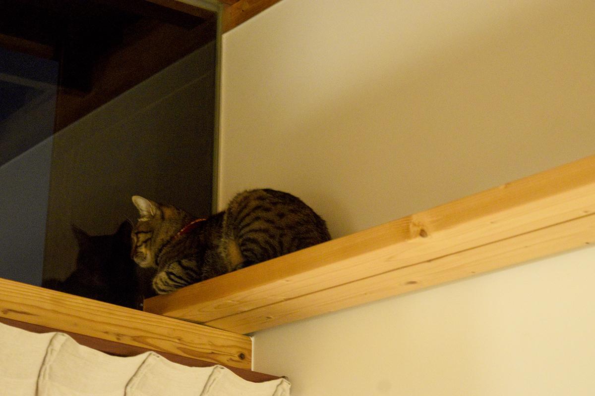夜になっても拗ねたままのキジトラ猫の虎ノ介