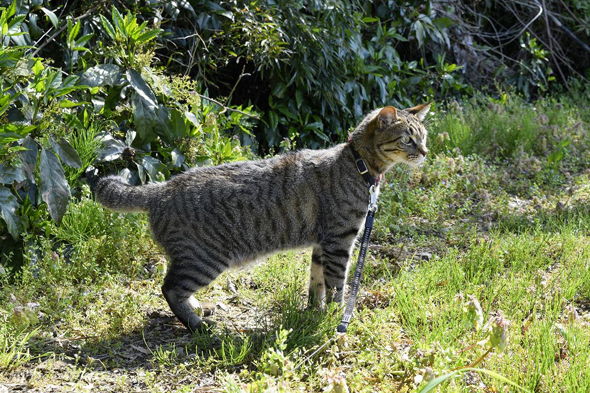 水音に驚くキジトラ猫の虎ノ介