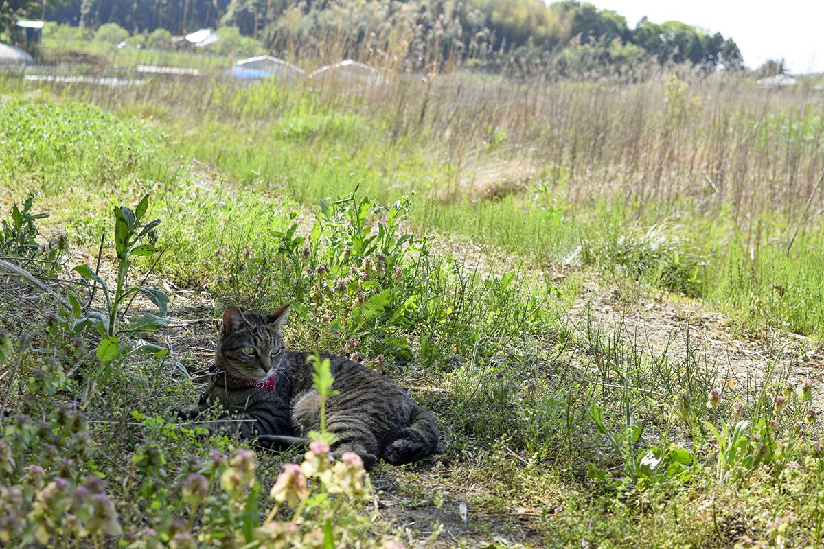 行きと同じ場所で休憩するキジトラ猫の虎ノ介