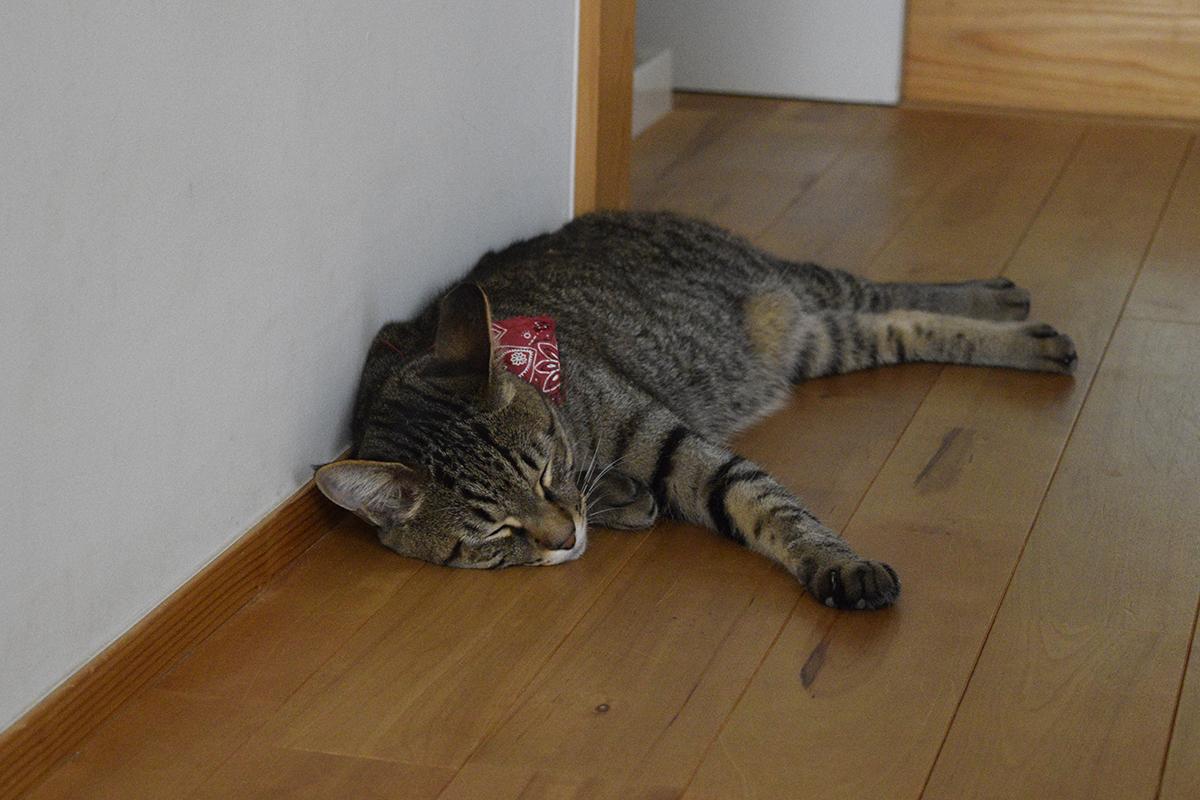 廊下で眠る虎ノ介