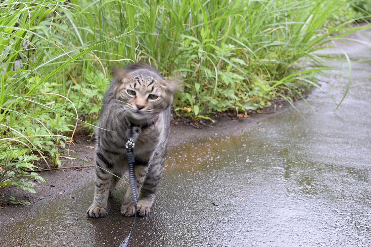 プルプルして雨を払いのける虎ノ介