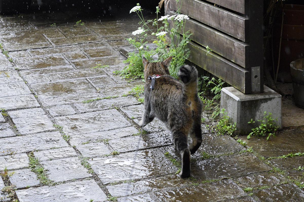 雨なのに走って鳥を見に行く虎ノ介