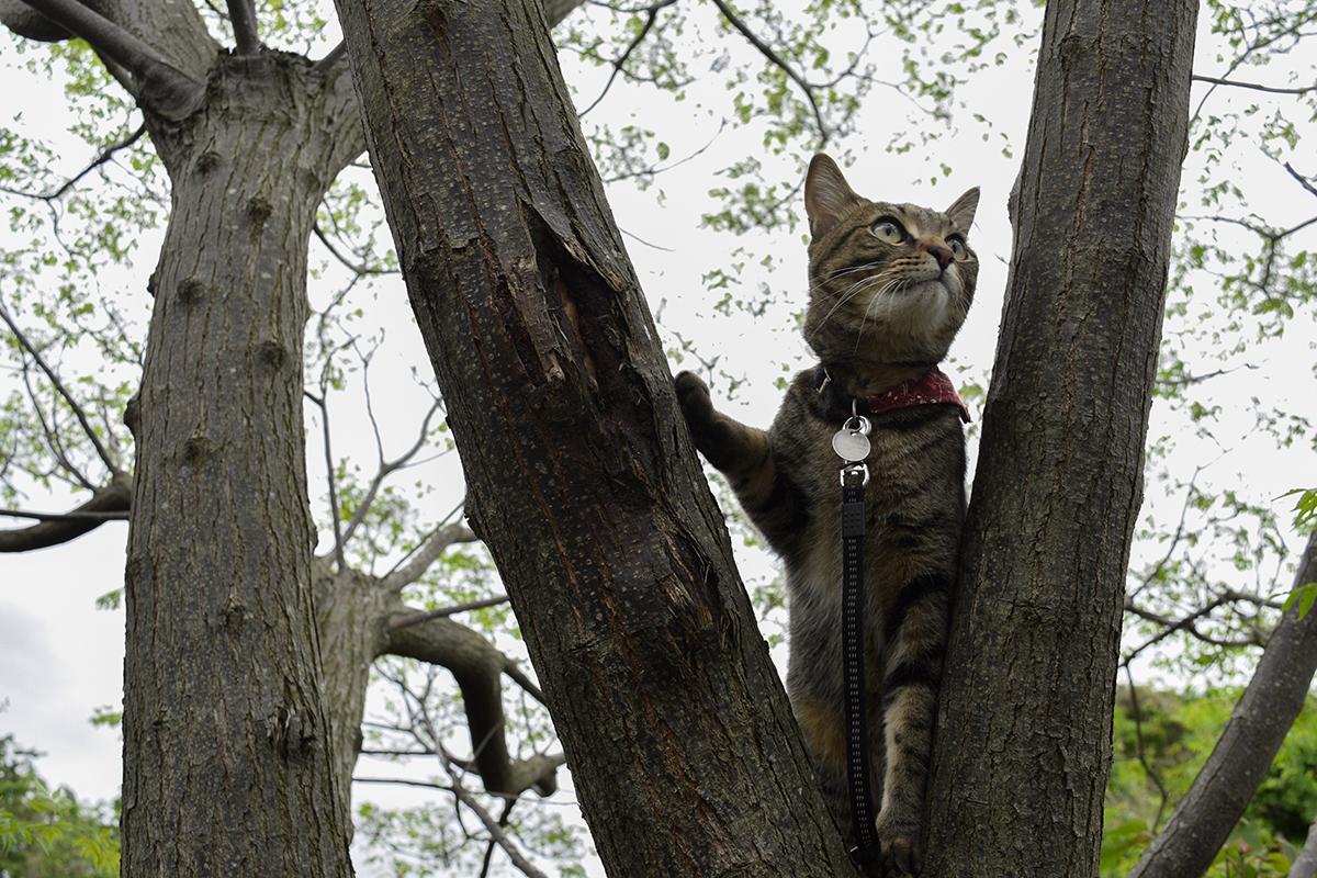 犬を発見したキジトラ猫の虎ノ介
